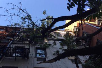 Hazardous Tree Assessment